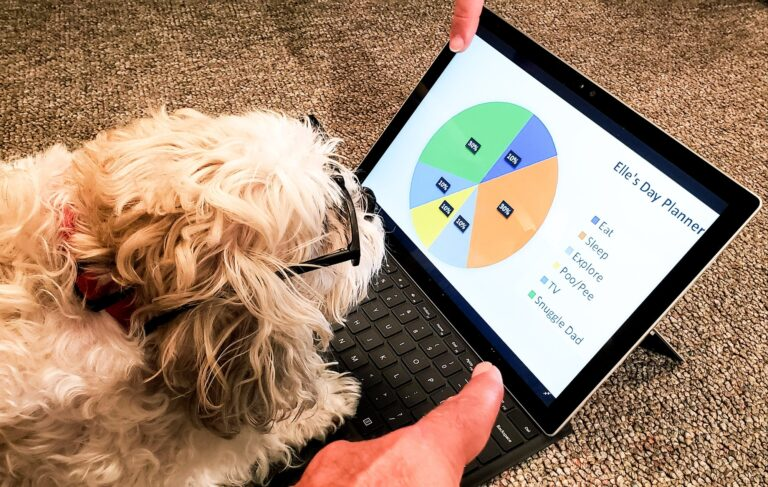 A cute and intelligent doggie has a Data Plot to plan her daily activities and her own password but
